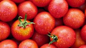 Montão dos tomates suculentos maduros cobertos por gotas da água Fundo Fim acima Movimento lento video estoque