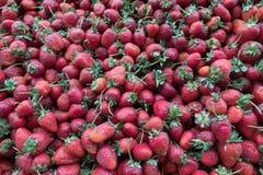 Montão fresco maduro da morango na tenda do mercado Foto de Stock Royalty Free