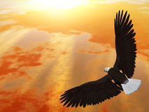 montée d'aigle Images libres de droits