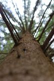 Montée dans un arbre très grand Photo stock