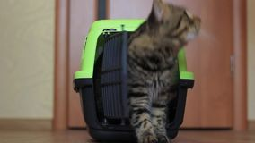 Montées de chat hors de la boîte pour des chats clips vidéos