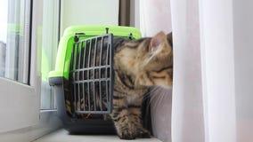 Montées de chat hors de la boîte pour des chats banque de vidéos