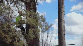 Montées de grimpeur un arbre banque de vidéos