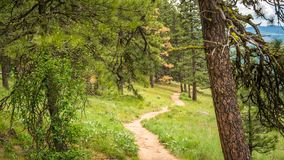 Montículo de Kamiak: Pinho Ridge Trail Fotos de Stock