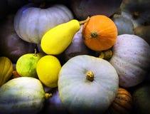 Montón colorido de la calabaza en una tienda de la granja en Nueva Zelanda fotos de archivo