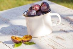 Montón de ciruelos en taza metálica en la tabla de madera en jardín el día soleado Imagenes de archivo