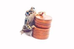 Montón de diversas monedas y de la rana loca Imagen de archivo
