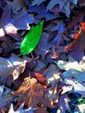 Montón de hojas en otoño Foto de archivo libre de regalías