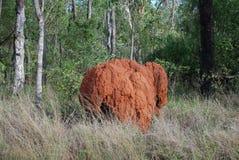 Montón de la termita de Queensland Fotografía de archivo libre de regalías