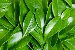 Montón de las hojas Fotografía de archivo
