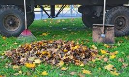 Montón de las hojas de otoño entre un rastrillo y una pala Fotos de archivo