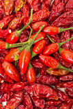 Montón de las pimientas rojas maduras y secadas Piri-Piri Fotografía de archivo libre de regalías