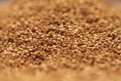 Montón de las semillas de la quinoa Imágenes de archivo libres de regalías