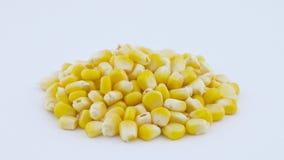 Montón de los corazones de maíz dulce frescos Rotación en la placa giratoria Aislado en el fondo blanco Primer Macro almacen de metraje de vídeo