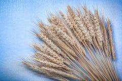 Montón de los oídos maduros del trigo del centeno en la opinión superior del fondo azul Fotos de archivo libres de regalías