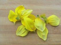 Montón de los pétalos de la flor de la dalia en fondo de madera Imagenes de archivo