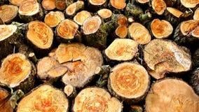 Montón de los registros de madera listos para el invierno almacen de metraje de vídeo