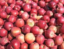 Montón de manzanas foto de archivo libre de regalías