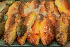 Montón de pescados frescos coloridos en el mercado mojado de Singapur en China Foto de archivo libre de regalías
