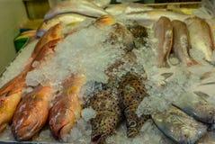 Montón de pescados frescos coloridos en el mercado mojado de Singapur en China Fotos de archivo libres de regalías