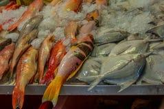 Montón de pescados frescos coloridos en el mercado mojado de Singapur en China Fotografía de archivo libre de regalías