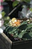 Montón del estiércol vegetal Foto de archivo libre de regalías