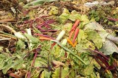 Montón del estiércol vegetal Fotografía de archivo