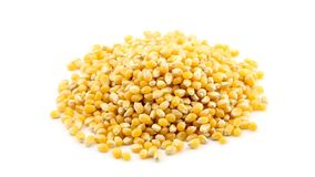 Montón del maíz o de los corazones de maíz orgánicos, crudos, secados que giran sobre blanco metrajes