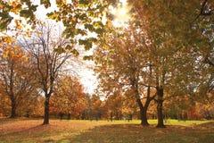 Mont皇家公园 蒙特利尔,金子秋天 库存图片