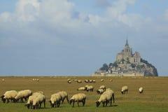 Mont Άγιος Michel και πρόβατα Στοκ Εικόνες