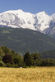 Mont Blanc and corn field Stock Photos