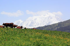 The Mont Blanc since the pass of Aravis Stock Image