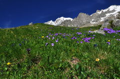 Mont Blanc peak, Italian Alps side. Alpine ridge Stock Photos