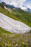 Mont-Blanc Snowy Mountain and Rocky Landscape with Spring Flower royalty free stock image