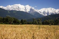 Mont Blanc y campo de maíz Foto de archivo libre de regalías