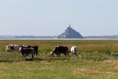 Mont-Heiliges Michel mit Kühen Lizenzfreies Stockbild