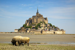 The Mont Saint Michel. The mont st. michel, grazing sheep in foreground Stock Photography