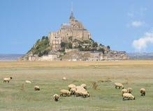 Mont Saint Michel Abbey, France. Mont Saint Michel Abbey and sheep grazing, France Stock Photo