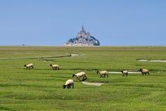Mont Saint Michel Abbey och sheeps i Normandie Arkivfoto