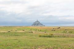 Mont Saint Michel del campo con las ovejas Fotos de archivo libres de regalías