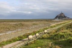 Mont Saint Michel e pecore, Normandia, Francia Fotografia Stock Libera da Diritti