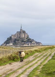 Mont Saint Michel et moutons, Normandie, France photos stock