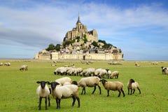Mont Saint Michel. A flock of sheep on the background Mont Saint Michel abbey Stock Photo