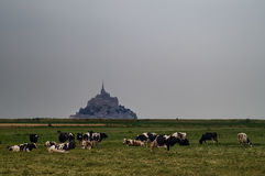 Mont-Saint-Michel France. Scenic view of Mont-Saint-Michel with cows grazing in foreground field, Normandy, France Stock Images