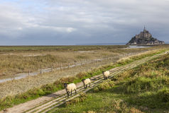 Mont Saint Michel och Sheeps, Normandie, Frankrike Royaltyfri Fotografi