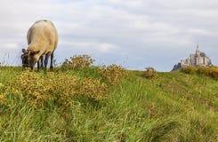Mont Saint Michel och Sheeps, Normandie, Frankrike Royaltyfri Foto