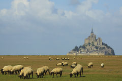 Mont Saint Michel and sheep Stock Photo