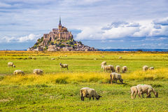 Mont Saint-Michel with sheep grazing, Normandy, France Stock Photo