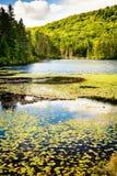 Mont-Tremblant nationalpark - ¡ la Perle för gummilacka à arkivfoton