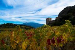 Mont Ventoux area. Autumn in the vineyards around the Mont Ventoux Royalty Free Stock Photos